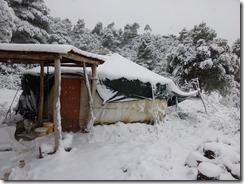 floresdevida-neige2