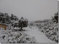 floresdevida-neige3