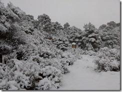 floresdevida-neige4